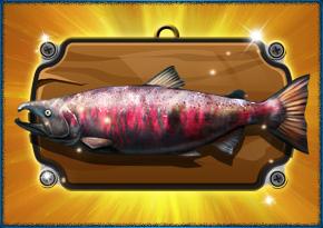 LetS Fish Com